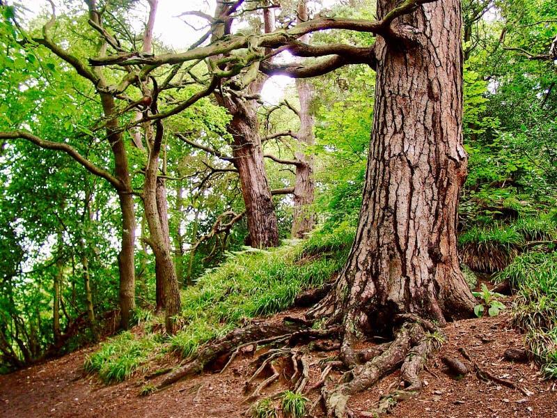 Roslyn Glen, Escócia fotografia de stock royalty free