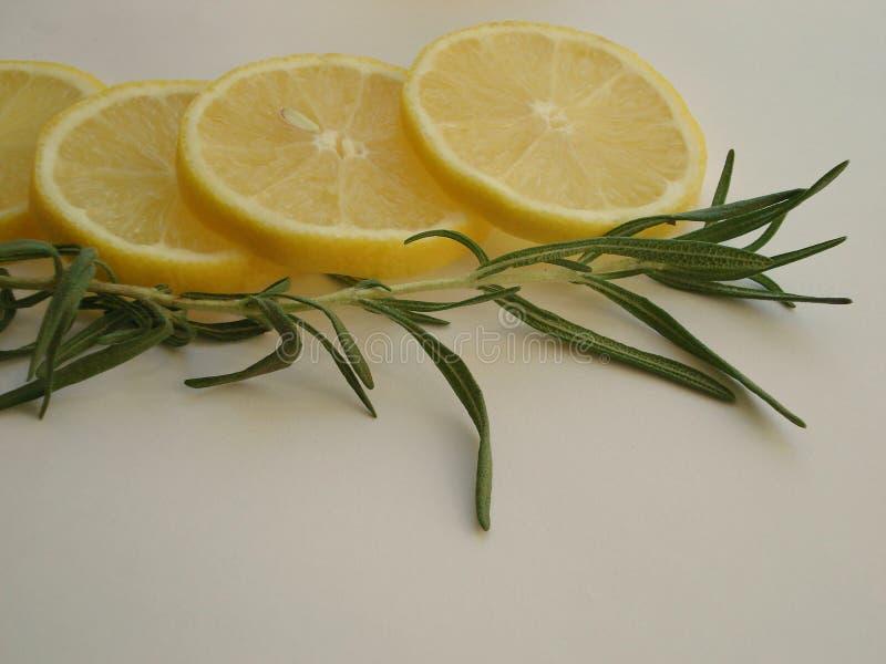 Rosmarinfilial med citronen arkivbild