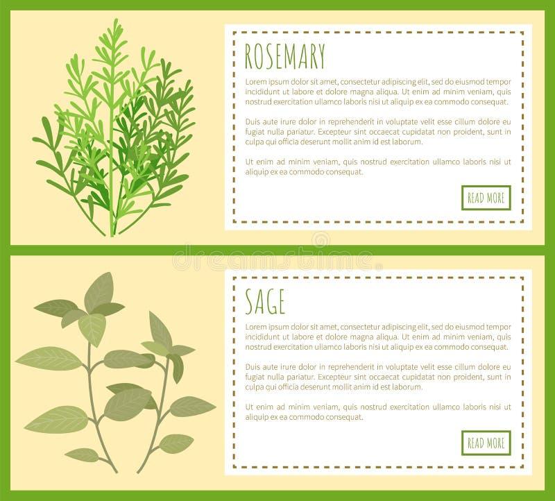 Rosmarini e Sage Green Plant Spicy Condiments illustrazione di stock