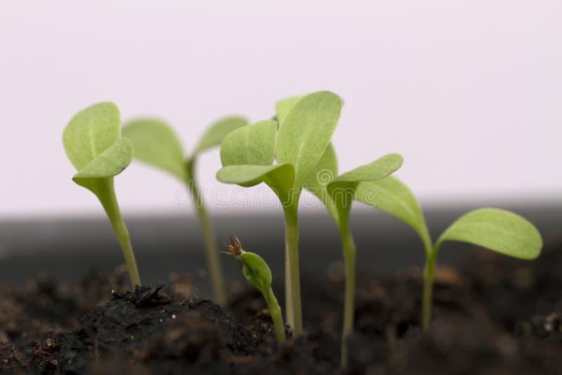 Rosnąć rośliny fotografia stock