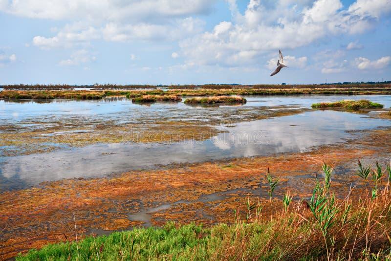 Rosolina, Rovigo, Véneto, Italia: laguna en la reserva de naturaleza Po imágenes de archivo libres de regalías