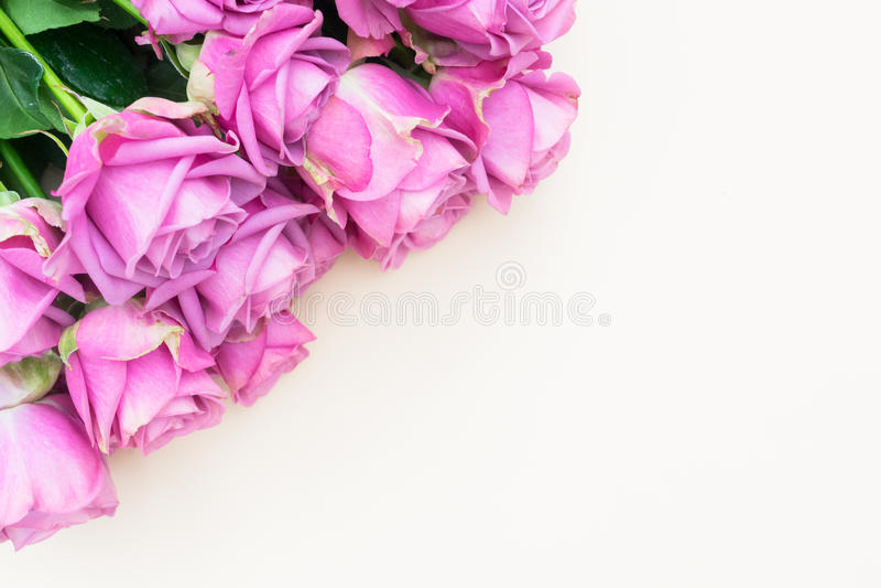 Rosor för valentindagviolet arkivfoto