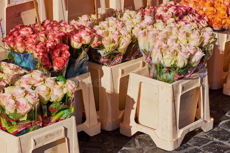 Rosor i olika färger på en veckomarknad i Tyskland royaltyfri bild