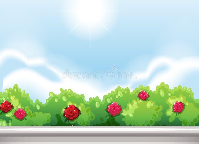 Rosor på parkera stock illustrationer