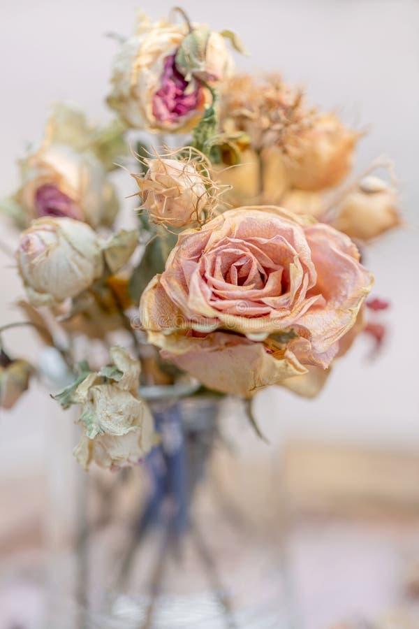 Rosor vissnade i en exponeringsglaskrus Urblekta rosor och torrt gr arkivfoton