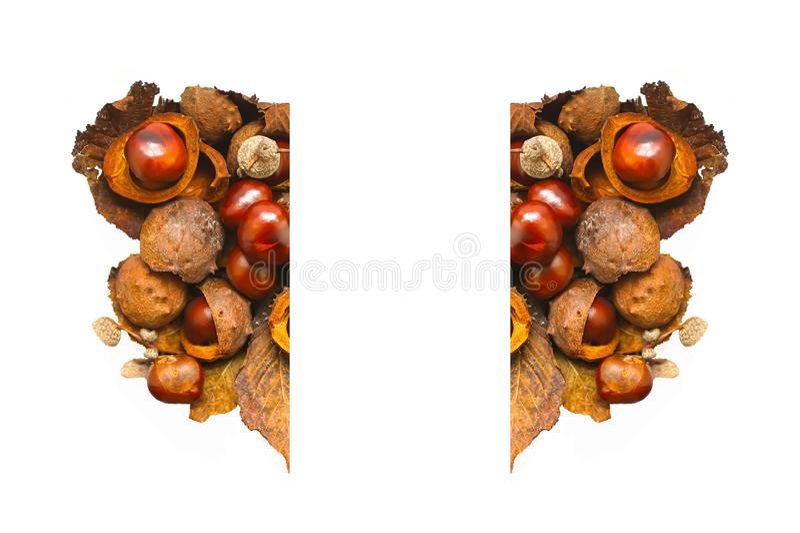 Rosskastanien im Herzen formen lokalisiert auf weißem Hintergrund Aesculus hippocastanum lizenzfreies stockbild