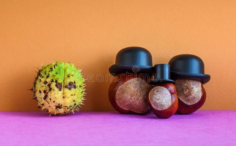 Rosskastanien-Rosskastaniensamenfamilie und geschlossenes Frucht Aesculus hippocastanumon auf braunem violettem Hintergrund Herbs lizenzfreie stockfotos