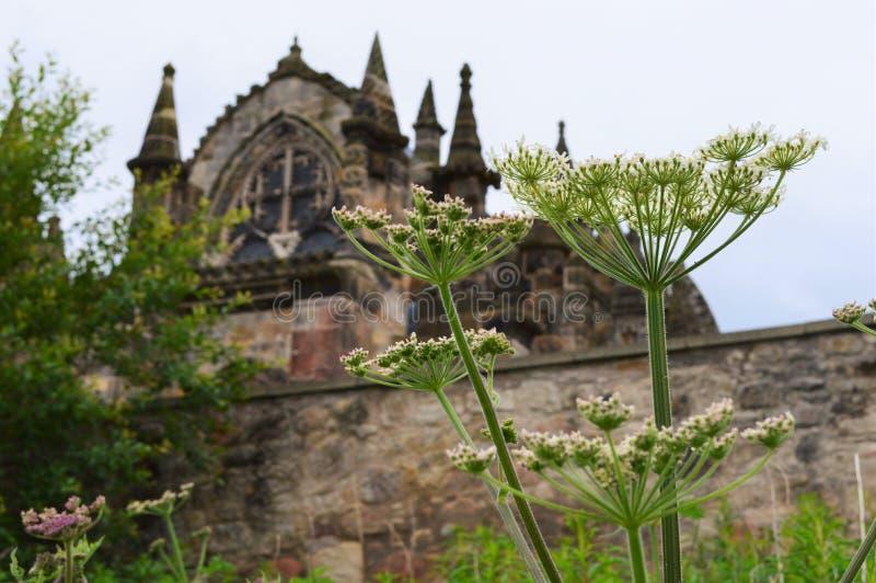 Rosslyn-Kapelle mit Blume stockfotos