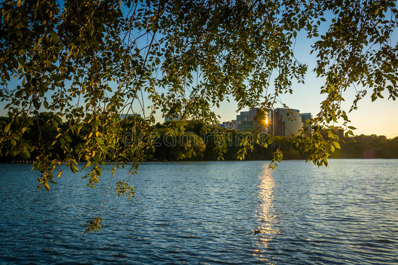 The Rosslyn skyline seen through trees at sunset, from the Geor royalty free stock images