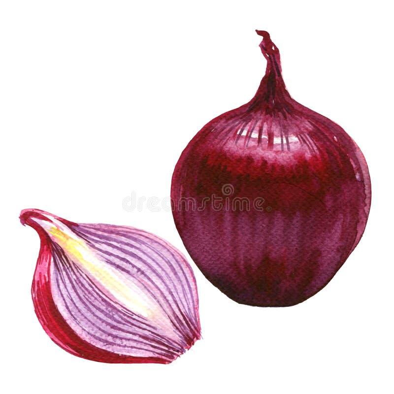 Rosso affettato ed intera cipolla isolata, illustrazione dell'acquerello su bianco royalty illustrazione gratis