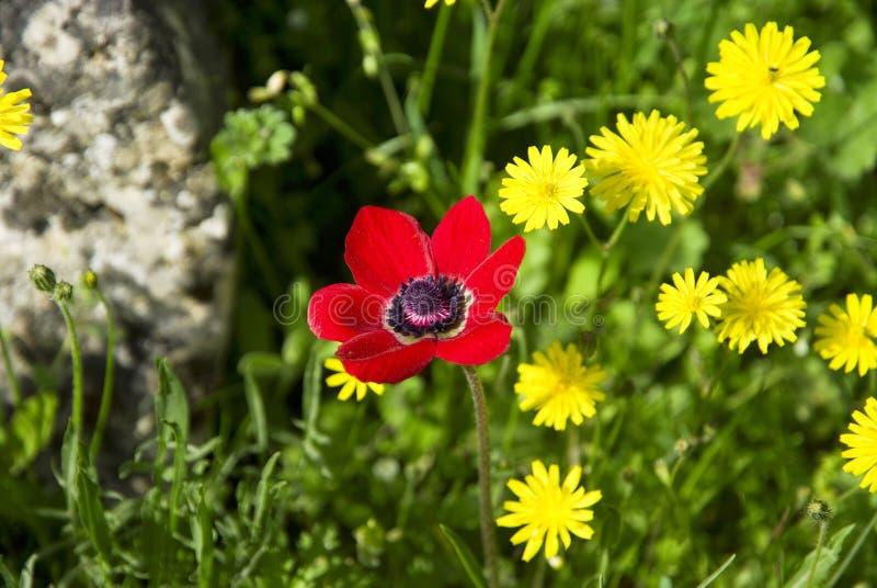 Download Rosso con i fiori gialli immagine stock. Immagine di podere - 56881993