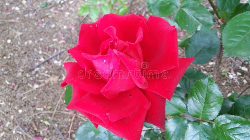 Rosso del sole del giardino delle piante e dei fiori della Spagna fotografie stock