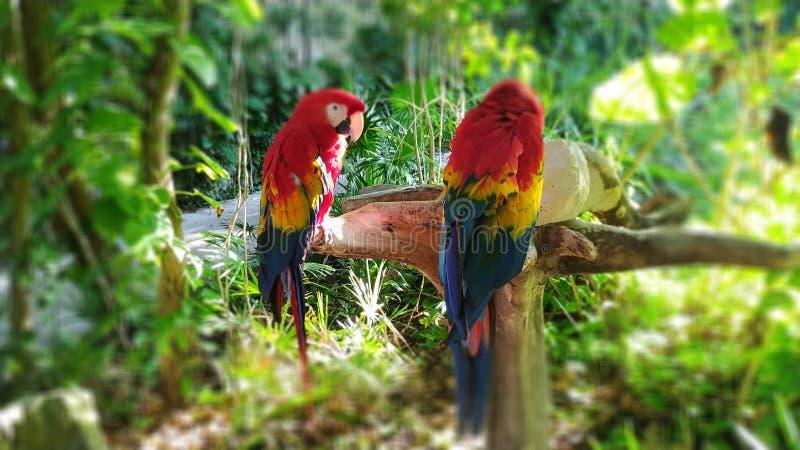 Rosso dell'ara nel Messico fotografia stock