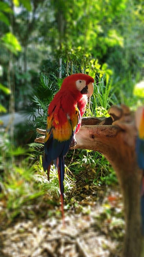 Rosso dell'ara nel Messico fotografia stock libera da diritti