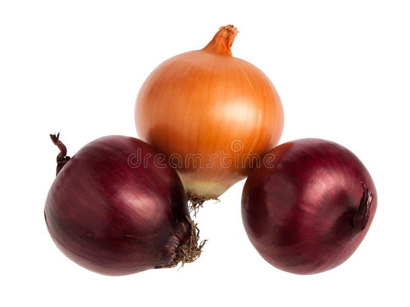 Rosso e cipolle spagnole dell'oro isolate su bianco fotografia stock