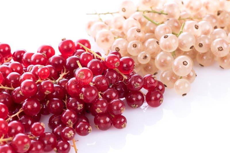 Rosso fresco e ribes bianco fotografie stock