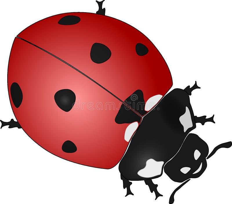Rosso, Ladybird, insetto, invertebrato immagini stock libere da diritti