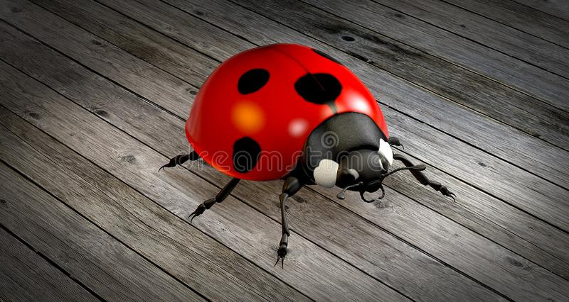 Rosso, Ladybird, insetto, scarabeo fotografie stock libere da diritti