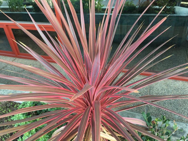 Rosso stupefacente, mediante la Nuova Zelanda 1 immagine stock