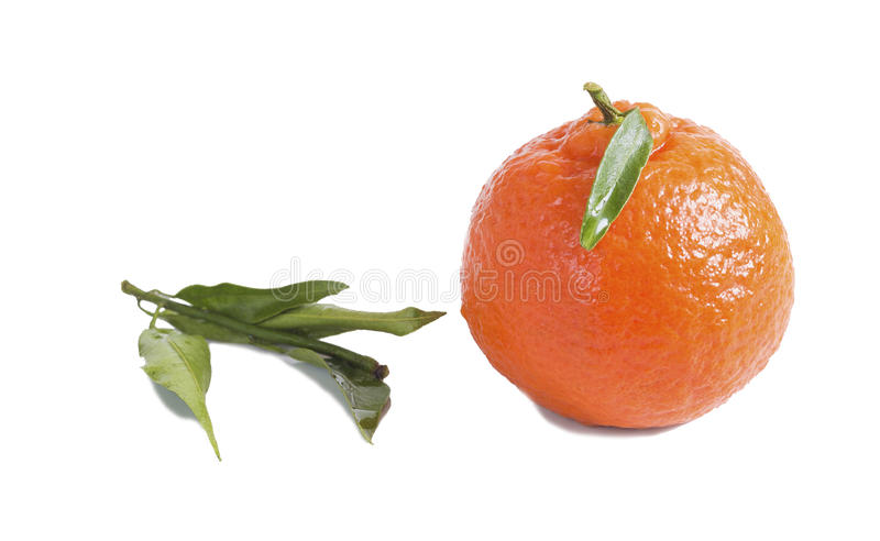 Rosso su un mandarino bianco del fondo con la foglia fotografie stock libere da diritti