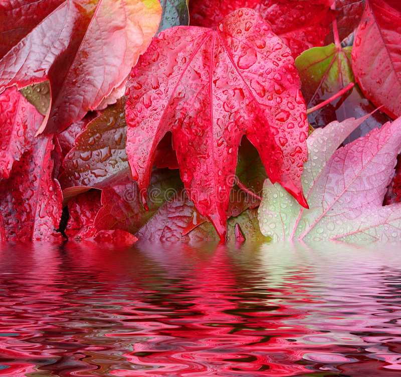 Rossoreare di autunno fotografie stock libere da diritti