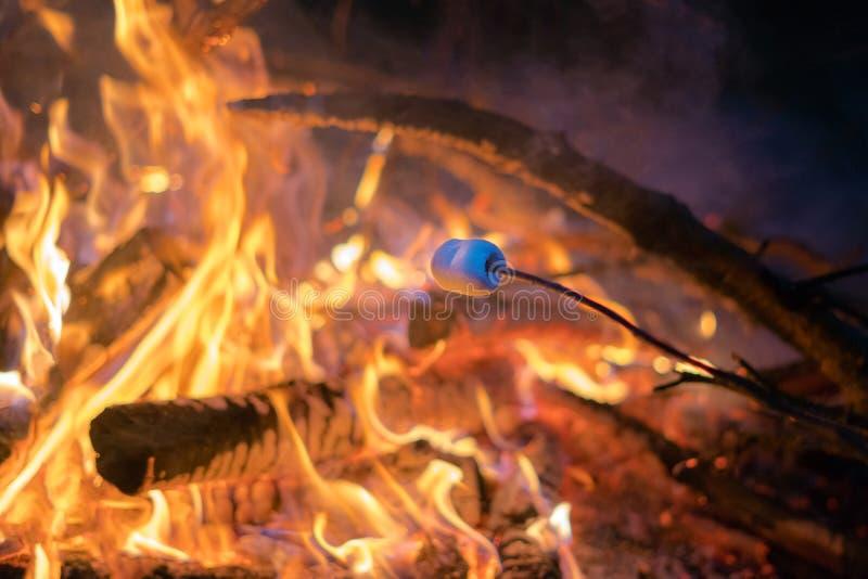Rosta en marshmallow på en pinne över en brandgrop på natten utomhus Campa aktivitet i naturen som kopplar av med vänner royaltyfri bild