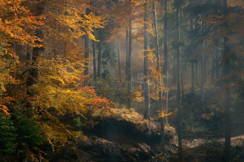 Rostade träd i en dimmig höstskog royaltyfri fotografi