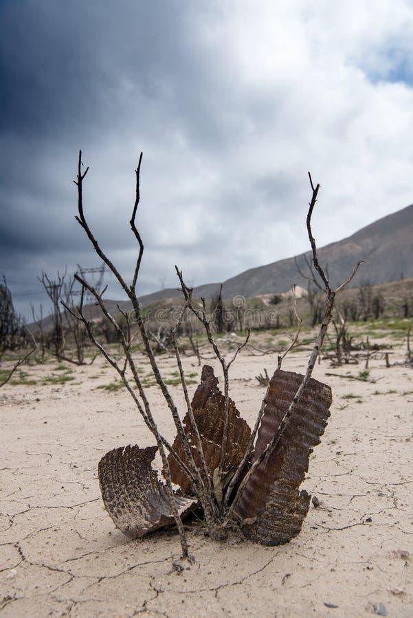 Rostig korrugerad metall på sprucken jord bredvid dött ris arkivfoton