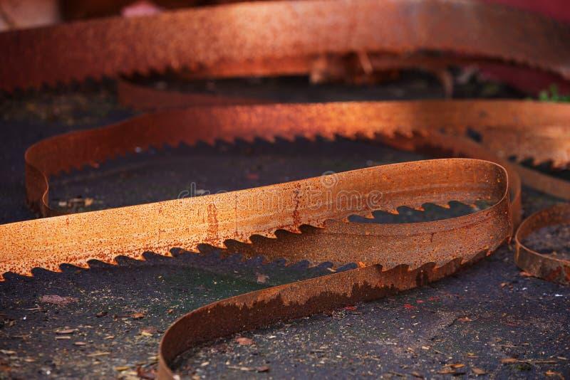 rostig saw för blad royaltyfri bild