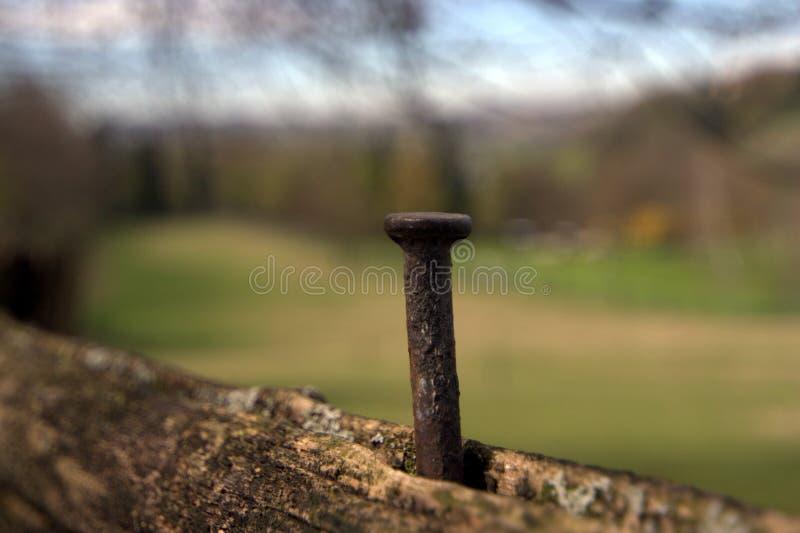 Rostiger Nagel auf einem Zaun lizenzfreie stockfotos
