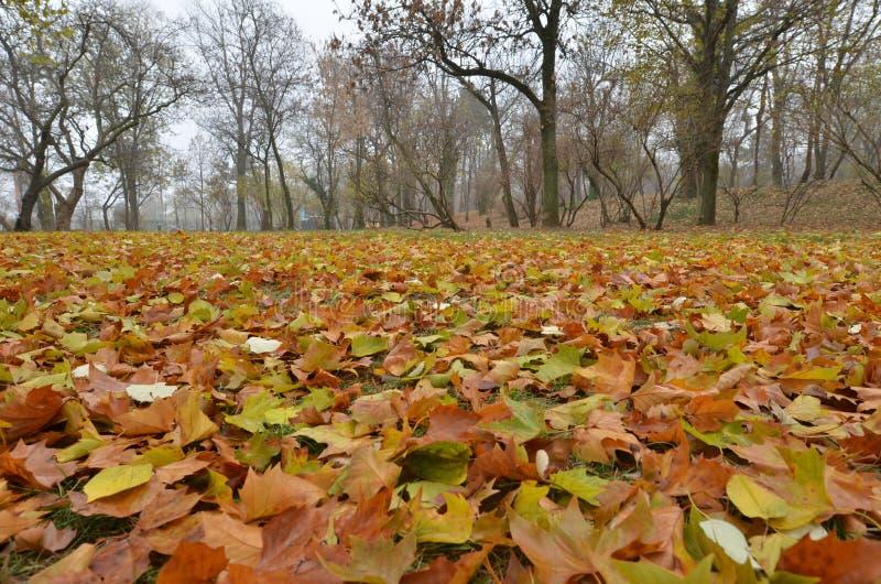 Rostiges Herbstlaub, das Grund-, niedrigen Winkel umfasst stockbild