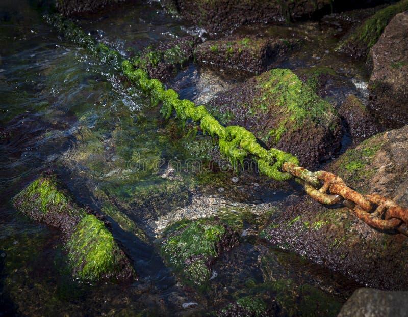 Rostigt chain bevuxet med den gröna algen klibbar ut ur havet royaltyfri foto