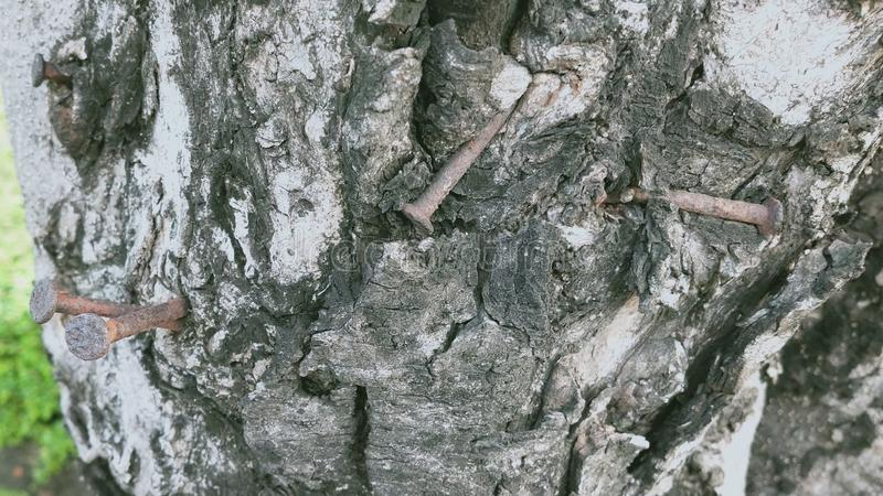 rostigt spikar på ett träd arkivbilder