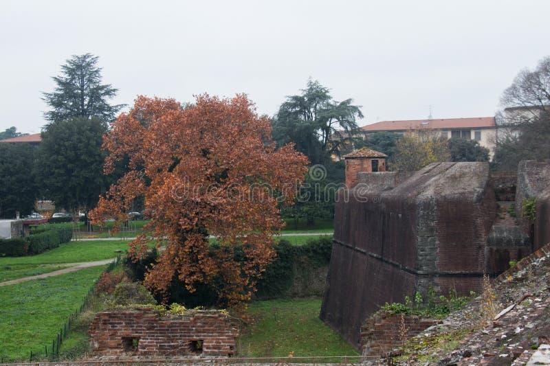 Rostigt träd på den Medici fästningen av Santa Barbara Pistoia tuscany italy royaltyfri fotografi