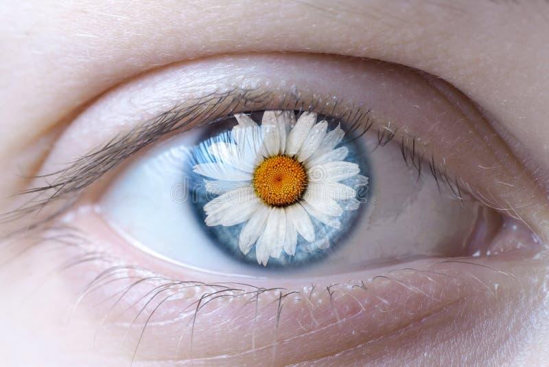 Rosto humano com o reflectio da flor da camomila imagens de stock
