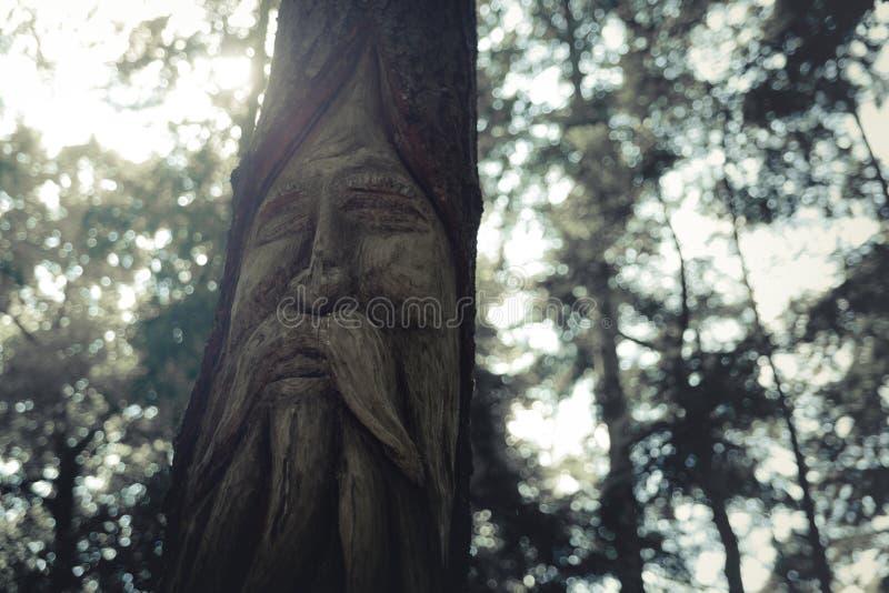 Rosto inscrito na madeira foto de stock royalty free