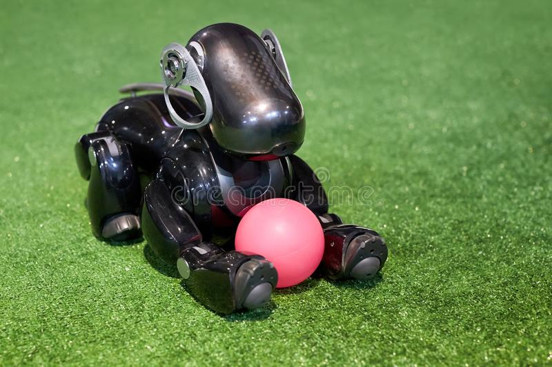 Japanese robot dog Aibo of black color lies on a green artificia stock photography