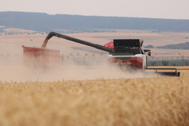 Rostselmash在德国结合打谷的麦子 库存照片