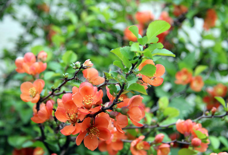 Rosy delicate flower