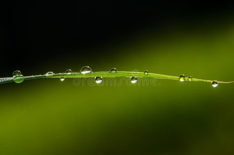rosy liść deszcz zdjęcia stock