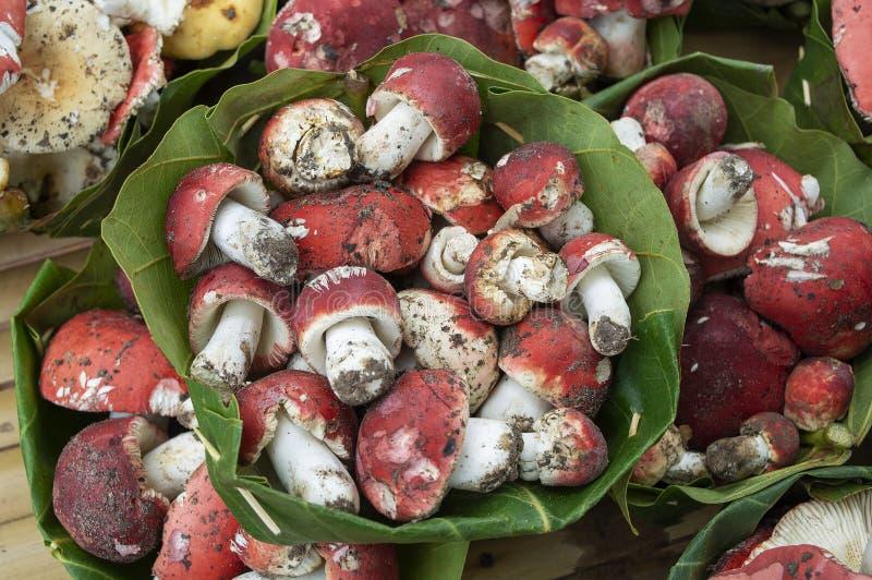 Rosy Russula Red Mushroom en un Krathong se va imágenes de archivo libres de regalías