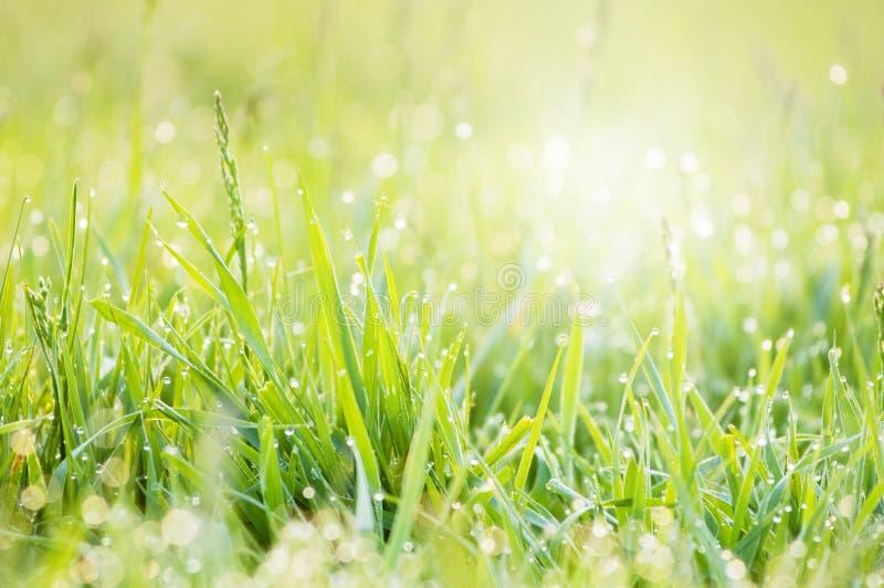 rosy trawy ranek fotografia royalty free