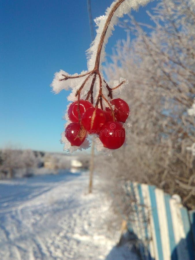Rosyjscy piękna zimna trakeny obrazy stock