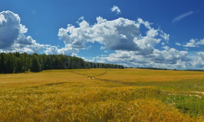 Rosyjska natura - Bezbrzeżny rosjanina pole 2 obrazy stock