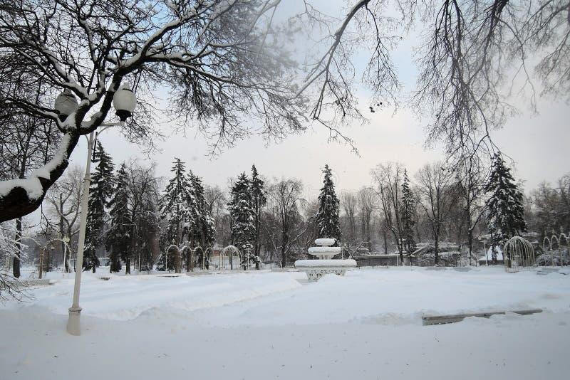 Rosyjska zima Widok zim drzewa zdjęcie royalty free