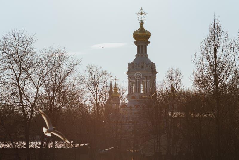 Rosyjski Kościół Chrześcijański, latające mewy i gołe drzewa wczesną wiosną Światło tylne Kościół Woskresenskaya w Petersburgu, R zdjęcia royalty free