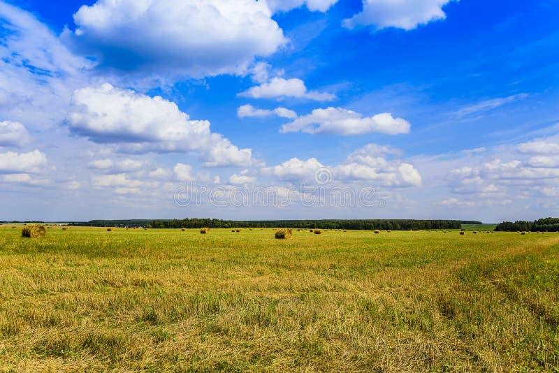 Rosyjski niebo i pole z skoszonym sianem, zbierającym w pokosach na jasnym letnim dniu w Sierpniowym Moskwa regionie zdjęcia royalty free