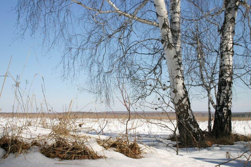 rosyjskiej natury zdjęcie stock
