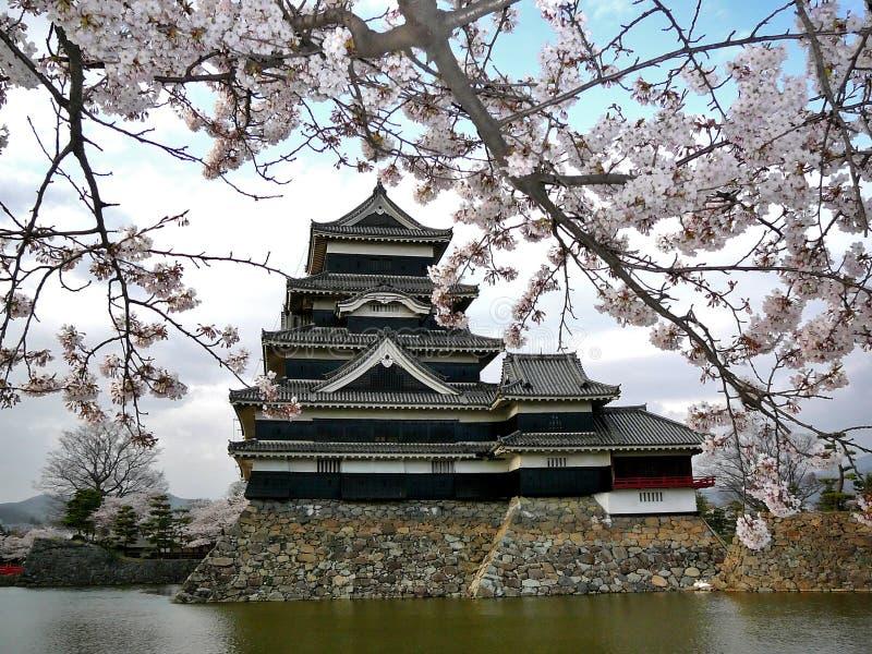roszują Matsumoto czereśniowego kwiaty obraz royalty free