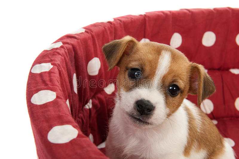 Rot beschmutztes Haustierbett mit kleinem Welpen stockbilder